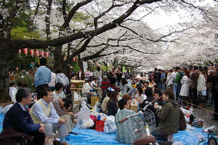 Pic Nic al parco di Ueno