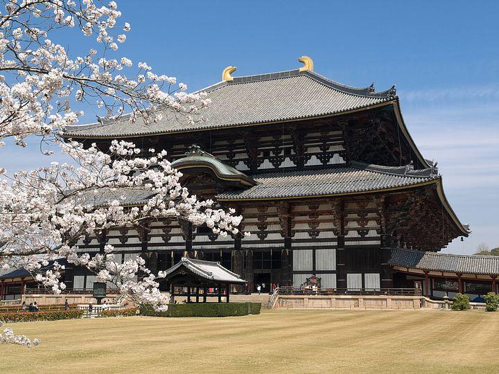 Due geisha ammirano i fiori di ciliegio a Kyoto