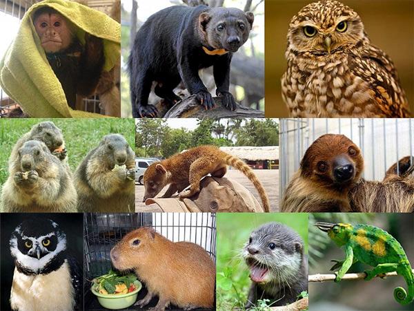 Vendita animali esotici in Giappone