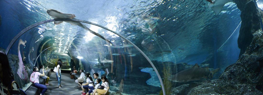 Siam ocean world for Dormire a phuket