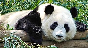 zoo-ueno-f