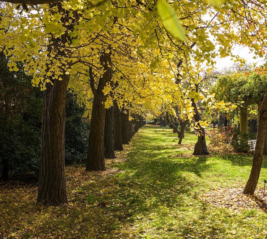 giardino botanico di brooklyn