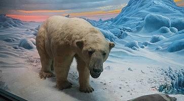 Museo Storia Naturale New York.Museo Di Storia Naturale Di New York