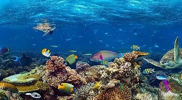 come-fare-snorkeling