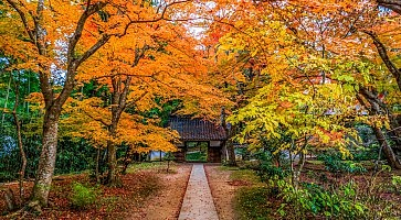 tempio-chusonji