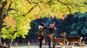 Nara Part at fall