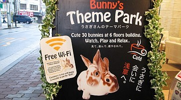 with-bunny-f
